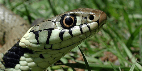 Wildlife Exchange Session -  British Native Reptiles tickets