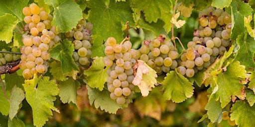 California Chardonnay vs White Burgundy Tasting