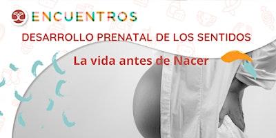 Desarrollo Prenatal de los sentidos – La vida antes de nacer