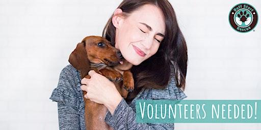 Crystal Pet Supply Plus Volunteer Recruitment Event
