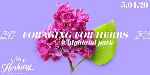 Foraging for Herbs : Plant Walk Through Highland Park - Spring Edition