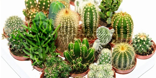 CT Cactus and Succulent Society 37th Annual Show & Sale