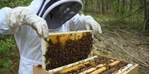 So, you want to be a beekeeper ! (theory course)