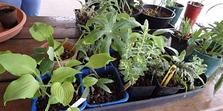 Annual Picnic, Plant Exchange, and Bird Walk tickets