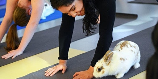 Bunny Yoga and Meditation