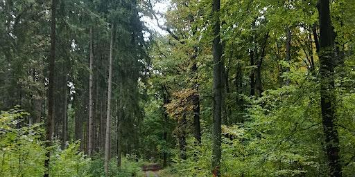 Stressprävention mit Waldbaden