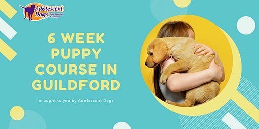 Puppy Classes in Guildford