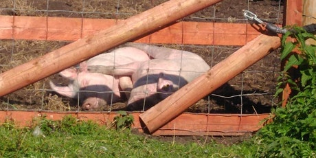 Introduction to Smallholding tickets