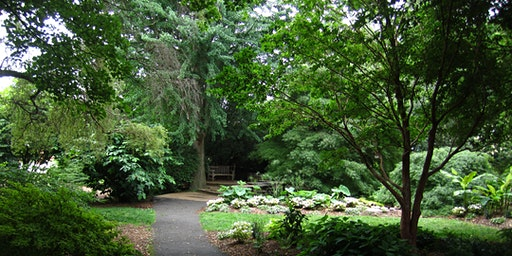 Tree Talks  VB Master Gardener Tree Steward Free Event