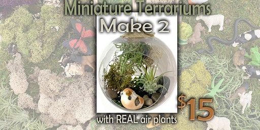 SOLD OUT! Create 2 mini Terrariums with LIVE air plant