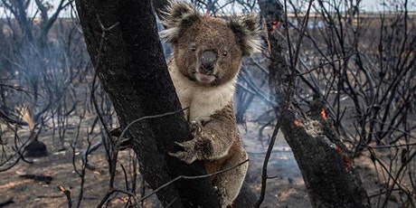 Reloading Life Gala to Benefit Australian Wildlife tickets