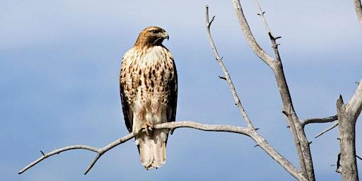 North Park Village Nature Center bird walk with FBC Chicago