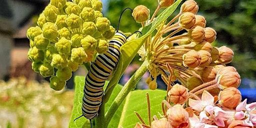 Bees, Birds and Butterflies
