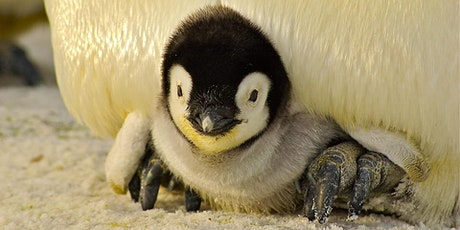 Crafty Penguins tickets