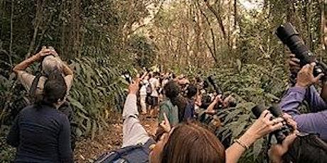 Festival de Aves UMA FLORESTA ingressos