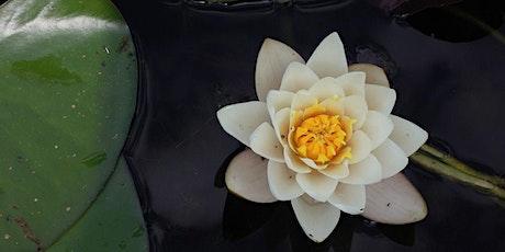 Achtsamkeits- & Meditationsworkshop Tickets
