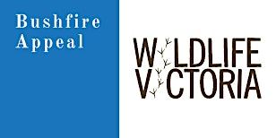 MINI MONEY BOXES - WILDLIFE VICTORIA BUSHFIRE DONATION ACTIVITY SESSIONS
