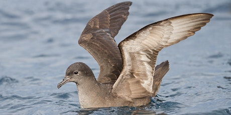 Seabird Research at Wilson Promontory  tickets