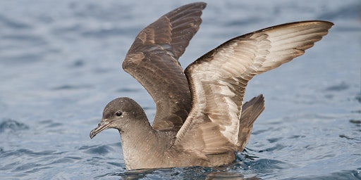 Seabird Research at Wilson Promontory