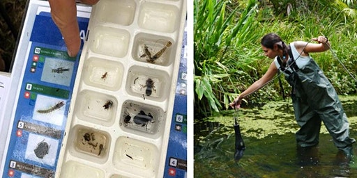 Waterbugs and Water Quality - Tallebudgera