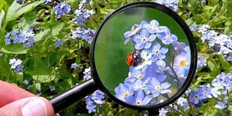 Nature's Detectives | Summer Camp tickets