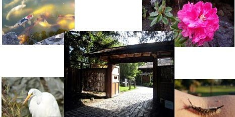 Free Guided Walking Tour - Japanese Friendship Garden