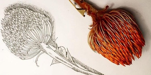 Botanic Art Drawing  with Louisa West @ Green Space 2/2