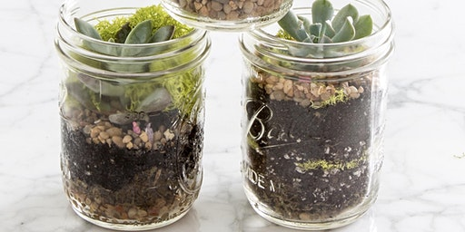 The Weston Collective Well-Being Event - Build your own Terrarium Workshop