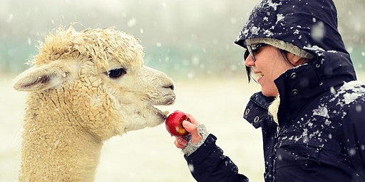 Knitting Workshop and Meet the Alpacas Experience