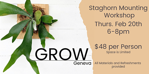 Staghorn Mounting Workshop