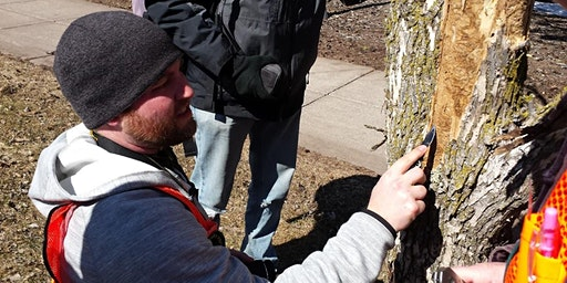 Emerald Ash Borer Field Workshops