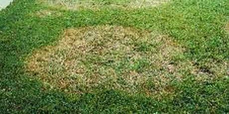 Turf Diseases Training - Thursday, April 2 / 10:00 am – 11:30 am - Presented by Dr. Phil Harmon, UF/IFAS Extension Plant Pathologist tickets
