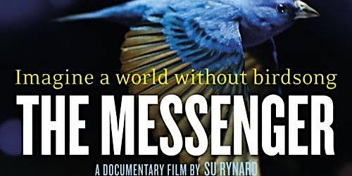 The Messenger- Imagine a world without birdsong