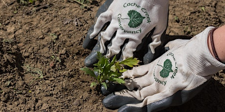 Planting Day at the Cache Creek Nature Preserve tickets