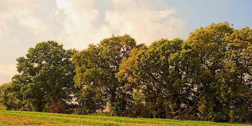 Countryside Tree Care