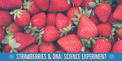 Second Saturdays: Strawberries and DNA