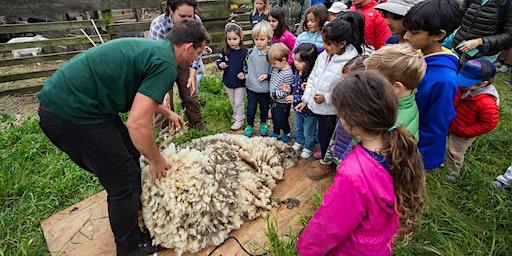 Family Farm Day - Sheep to Shawl