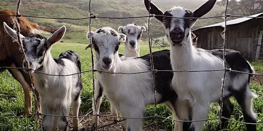 Family Farm Day - Farm Animal Frolic