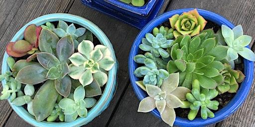 Valentine's Day Succulent Pot Workshop