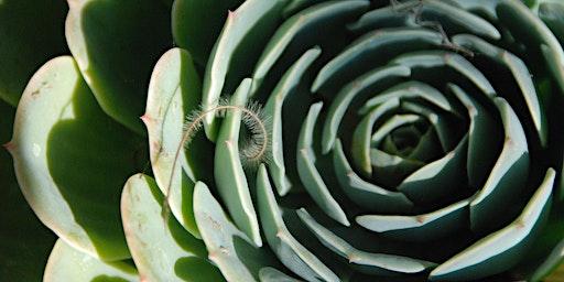 Personalizing Your Landscape series: Pet Friendly Landscaping