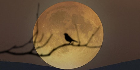 Full Moon Night Hike tickets