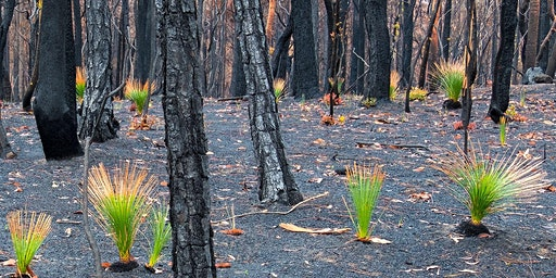 Physics Fundraiser | Bushfire Appeal