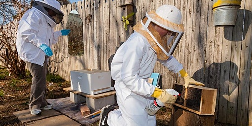Beekeeping Workshop: How to hive a package