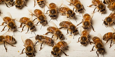 Beekeeping Workshop: Routine Inspections, Troubleshooting, and IPM tickets