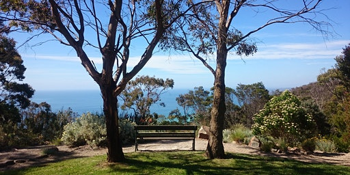 RAW Travel 'Walk & Talk' (Arthurs Seat, Dromana)
