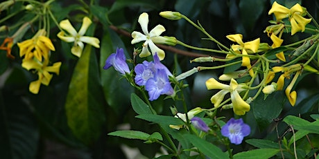 Using more local native plants in your garden- Free guided walk tickets