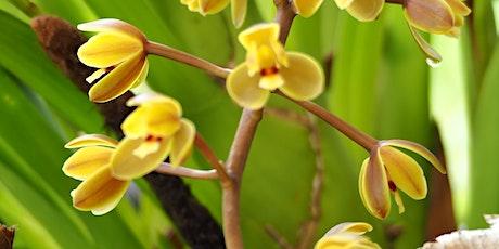 Mystery Walking Tour of Maroochy Regional Bushland Botanic Garden tickets