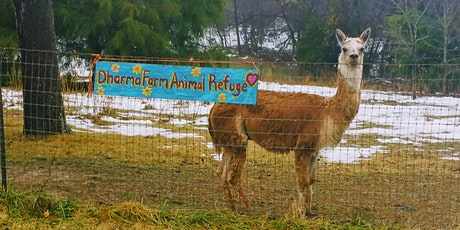 Open House and Sunday Brunch @ Dharma Farm Animal Refuge tickets