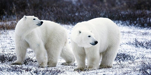 Polar Animal Family Science Day (2:00pm)