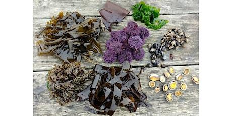 Tidepool Foraging Class with Sam Greenberg tickets